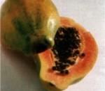 150_papaja.jpg